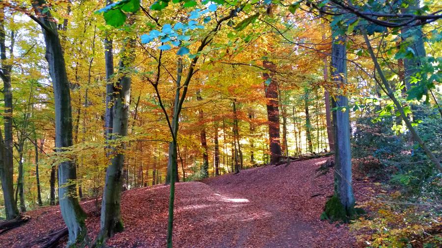 Schwerter Wald