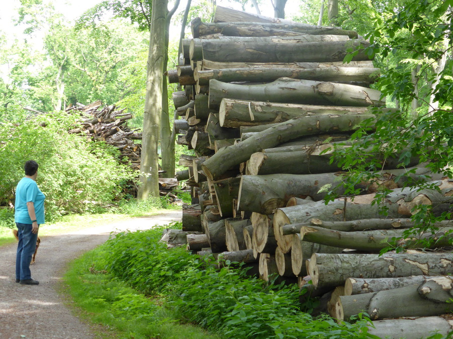 Castroper Holz