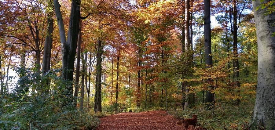Krähenwald – Bochum